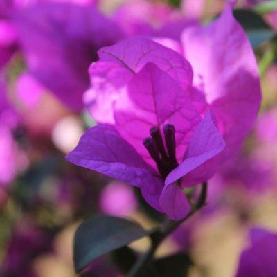 10) flores