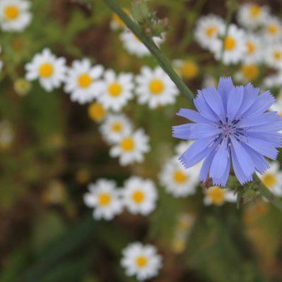 11) flores