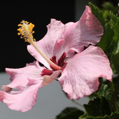12) flores