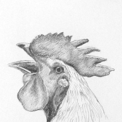 17) animales