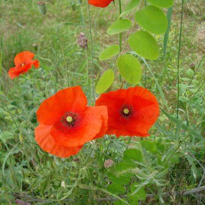 2) flores