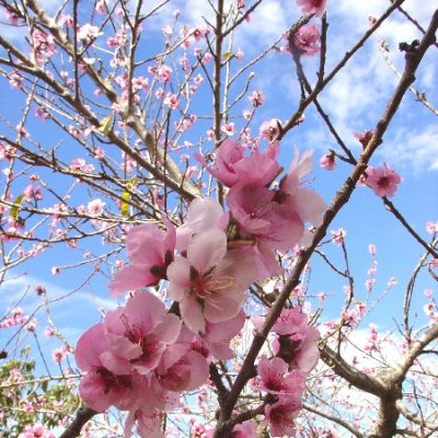 3) flores
