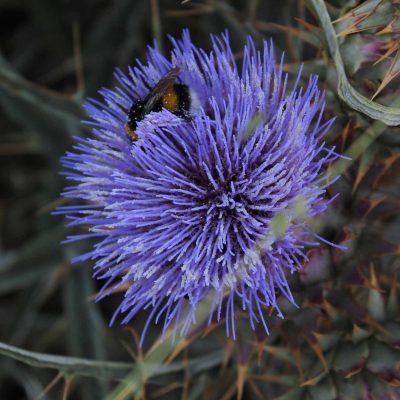 4) flores