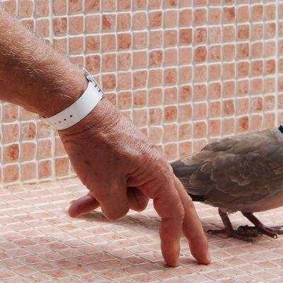 5) animales