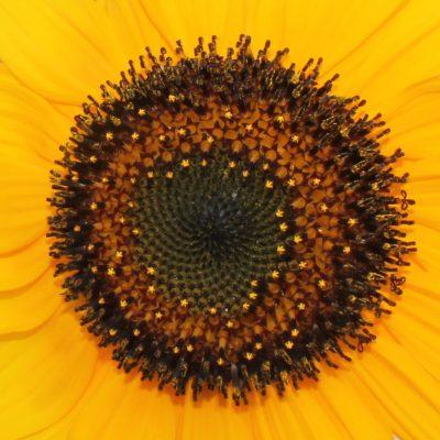 5) flores