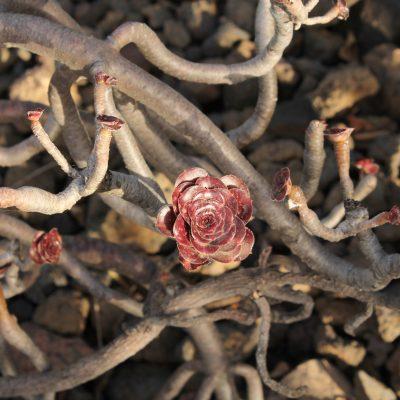 6) flores