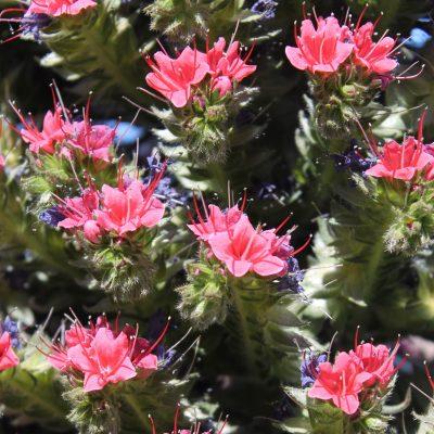 9) flores